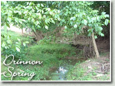 About Drinnon Spring
